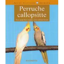 Perruche Callopsitte
