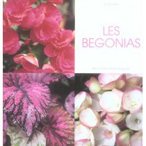 Les Begonias