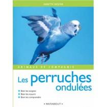 Animaux De Compagnies : Les Perruches