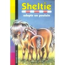 Sheltie adopte un poulain