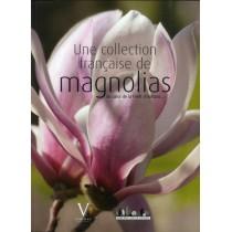 Une collection française de magnolias au coeur de la forêt d'Orléans